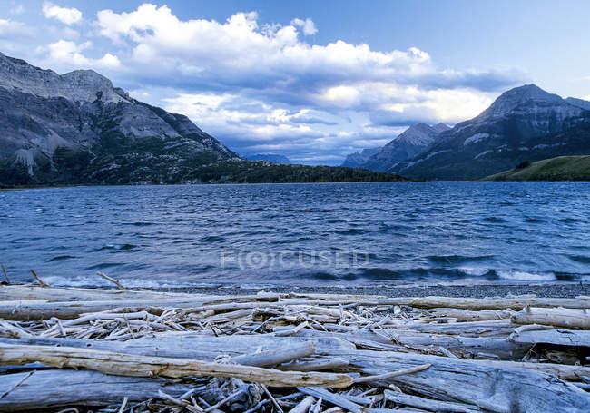 Стара деревина на морі берег, гори, Waterton Np, Канада — стокове фото