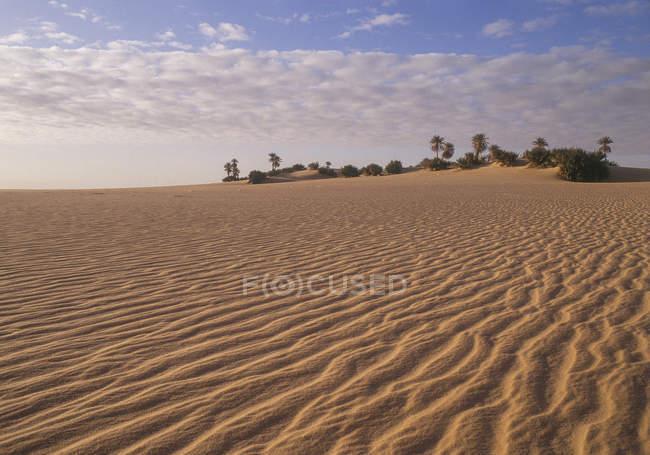 Sand dunes, palm trees on background, Sahara, Libya — Stock Photo