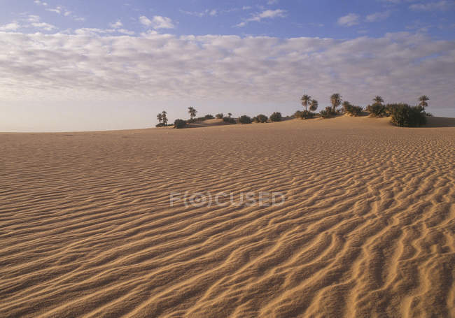 Sand dunes, palm trees on background, Sahara, Libya — Stock Photo
