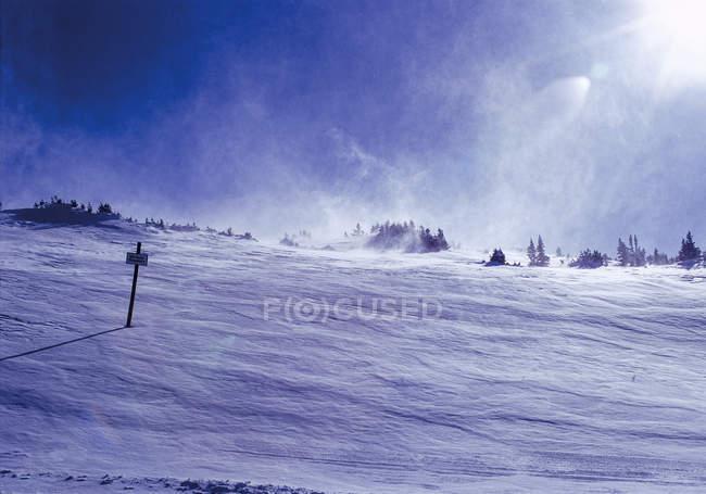 Дрейфующих на зимний пейзаж с деревьями на фоне снега — стоковое фото