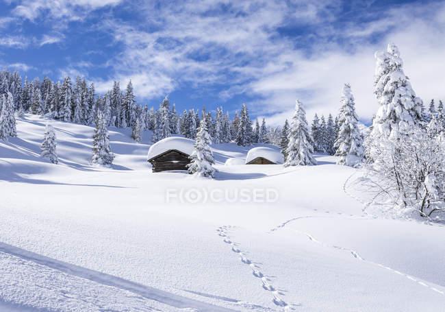 Зимний пейзаж и хижины против деревья в снегу — стоковое фото