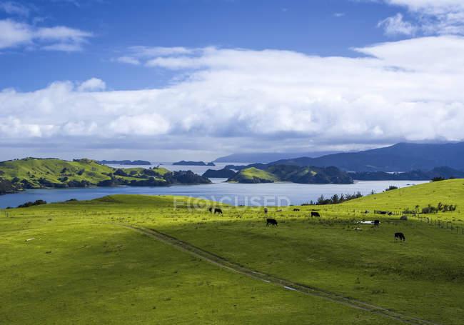 Вид на поле зеленой травы и озеро на фоне в дневное время — стоковое фото