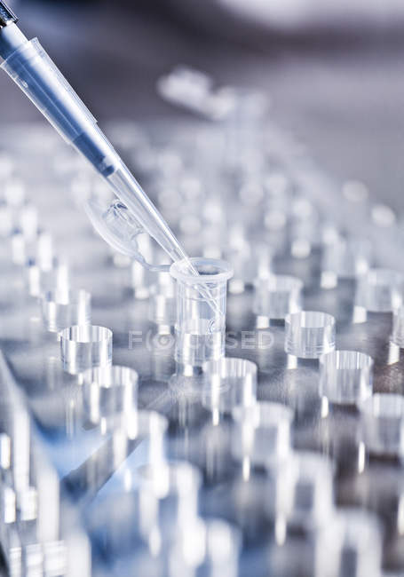 Pipette on sample row in laboratory — Stock Photo