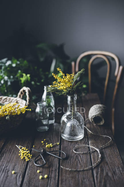 Mimosa flowers in vase and on rustic wooden table with twine and scissors — Stock Photo