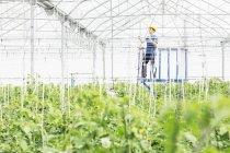 Trabajador ajustar aspersores en invernadero - foto de stock