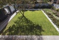 Tree casting shadow in sunny luxury yard — Stock Photo