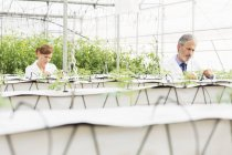 Botanists examining plants in greenhouse — Stock Photo