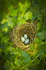 Chiuda in su delle uova di uccello nel nido — Foto stock