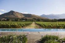Luxury lap pool overlooking vineyard and mountains — Stock Photo