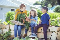 Teacher and students in vegetable garden — Stock Photo