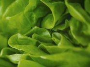 Extreme close up of round lettuce — Stock Photo