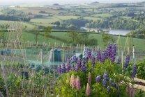 Fleurs qui poussent dans rural jardin donnant sur la campagne — Photo de stock