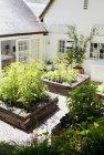 Jardineras en patio moderno - foto de stock