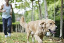 Человек и собака работает в парке вместе — стоковое фото