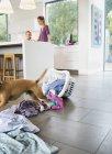 Собака делает беспорядок на кухне в современном доме — стоковое фото