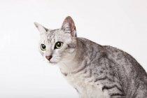 Nahaufnahme des Katzengesichts auf weißem Hintergrund — Stockfoto