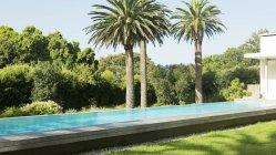 Palm trees next to luxury lap pool — Stock Photo