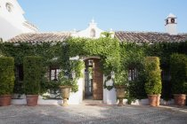 Кімнатні topiaries і плющем оточують villa вхід — стокове фото