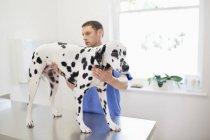 Ветеринар осматривает собаку в ветеринарной хирургии — стоковое фото