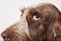 Крупным планом лицо собак на белом фоне — стоковое фото