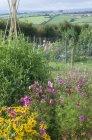 Квіти ростуть в сільській саду з видом на сільську місцевість — стокове фото