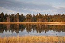 Árboles que se reflejan en el lago todavía - foto de stock