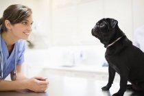 Ветеринарная собака в ветеринарной хирургии — стоковое фото