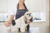 Imagem cortada de groomer trabalhando no cão no escritório — Fotografia de Stock