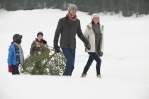 Smiling family dragging fresh Christmas tree in snowy field — Stock Photo