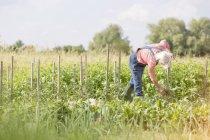Старшая женщина проверяет растения в солнечном огороде — стоковое фото