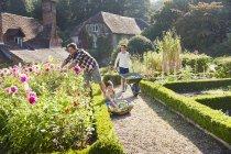 Jardinería familiar en jardín de flores soleado - foto de stock