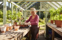 Senior woman potting plants in sunny greenhouse — Stock Photo
