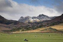 Gado pastando no vale rural abaixo montanhas — Fotografia de Stock