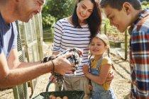 Family harvesting fresh eggs from chicken — Photo de stock
