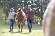Пара прогулочных лошадей на сельском пастбище — стоковое фото