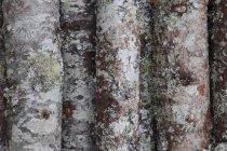 Chiuda in su del muschio sugli alberi — Foto stock