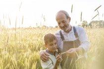 Farmer grandfather and grandson examining rural wheat crop — Stock Photo