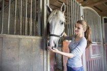 Женщина кормит лошадь в конюшне — стоковое фото