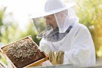Пчеловод в защитный костюм, изучения пчел на сотовый — стоковое фото