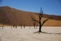 Згорілих дерев в пустелі, мертві Vlei пустелі, Намібія — стокове фото