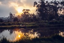 Сонця над спокійна джунглі, Мадагаскар — стокове фото