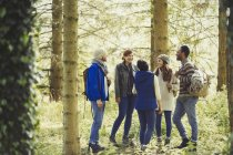 Friends talking hiking in sunny woods — Stock Photo