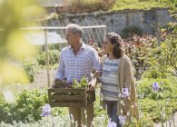 Couple shopping for flowers in sunny plant nursery garden — Stock Photo