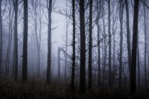 Árboles forestales de invierno etéreos envueltos en niebla, Naestved, Dinamarca - foto de stock