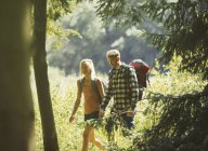 Couple with backpacks hiking in sunny woods — Stock Photo