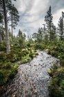 Tranquilo rio Outono entre árvores na floresta remota, Loch uma Eilein, Escócia — Fotografia de Stock