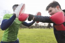Closeup view of men boxing in green park — Stock Photo