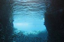 Школи риби плавати під водою, Vava'u, Тонга, Тихий океан — стокове фото