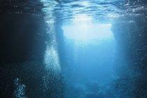 Школи риби, плавання під водою в спокійному синій океан, Vava'u, Тонга, Тихий океан — стокове фото