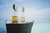 Ломтики лайма в пивных бутылках на льду на спокойном пляже океана, Мальдивы, Индийский океан — стоковое фото